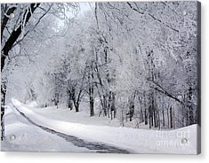 Frosted Trees Path Acrylic Print
