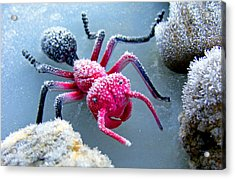 Frosty Ant In Winter Acrylic Print