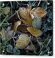 Frosty Autumn Leaves Acrylic Print by Ellen Tully