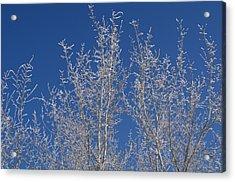 Frosty Blue Sky Acrylic Print by Sheila Byers