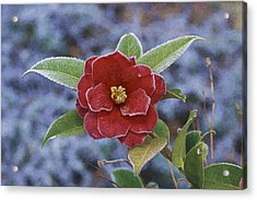 Acrylic Print featuring the photograph Frosty Camellia by Gregory Scott