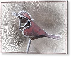 Acrylic Print featuring the photograph Frosty Cardinal by Patti Deters