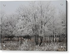 Frosty Day Acrylic Print by Alicia Knust