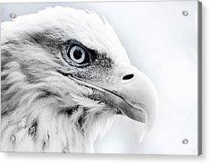 Frosty Eagle Acrylic Print