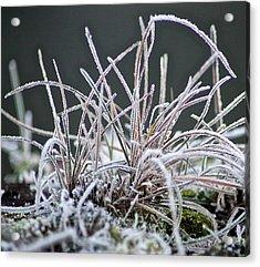 Frosty Grass Acrylic Print by Karen Grist