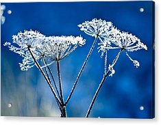 Frosty Light Acrylic Print