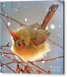 Frosty Acrylic Print by Nava Thompson