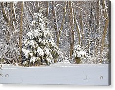 Acrylic Print featuring the photograph Frosty Pine by Dacia Doroff