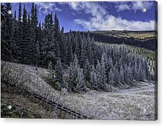 Frosty Pines Acrylic Print by Tom Wilbert