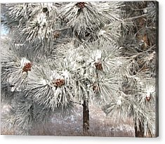 Frosty Pinetree Acrylic Print by Steven Parker