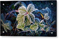 Acrylic Print featuring the photograph Frosty Ten Degrees by Julia Hassett