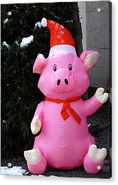 Frosty The Pig Acrylic Print