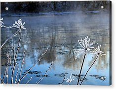Frosty Webs And Weeds Acrylic Print by Hanne Lore Koehler