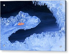 Frozen Beauty Aka Ice Is Nice Acrylic Print by Bijan Pirnia