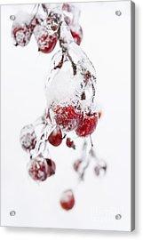 Frozen Crab Apples Acrylic Print by Elena Elisseeva