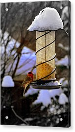 Frozen Feeder And Disappointment Acrylic Print by Zafer Gurel