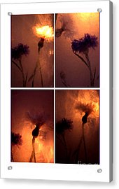 Acrylic Print featuring the photograph Frozen Flowers Collage by Randi Grace Nilsberg