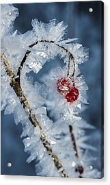 Frozen Food Acrylic Print by Ted Raynor