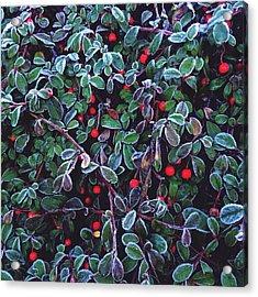Frozen Fruit Tree Acrylic Print by Romy Lahoud / Eyeem