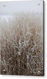 Frozen Grass Acrylic Print by Debbie Hart