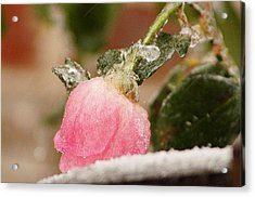 Frozen In Time Acrylic Print by Kathy Churchman