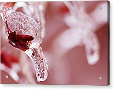 Acrylic Print featuring the photograph Frozen Jewel  by Debbie Oppermann