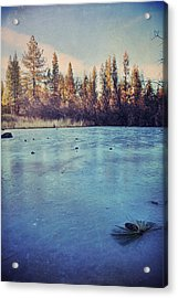 Frozen Acrylic Print by Laurie Search