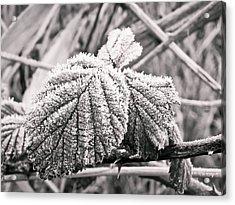 Frozen Leave Acrylic Print