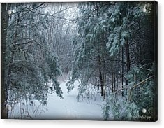 Frozen Acrylic Print by Michaela Preston