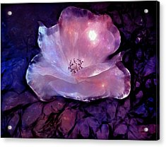 Frozen Rose Acrylic Print by Lilia D
