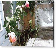 Frozen Rose Acrylic Print by Marlene Rose Besso
