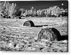 frozen snow covered hay bales in a field Forget Saskatchewan Canada Acrylic Print by Joe Fox