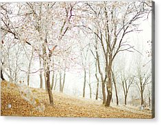 Frozen Spring Acrylic Print by Silvia Floarea Toth