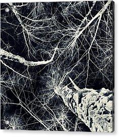 Frozen Acrylic Print by Stelios Kleanthous