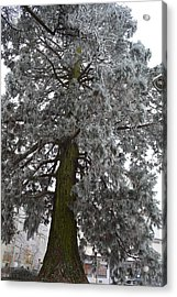 Acrylic Print featuring the photograph Frozen Tree 2 by Felicia Tica