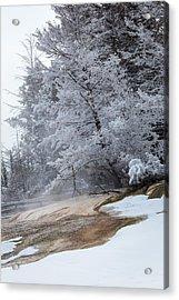 Frozen Tree Acrylic Print