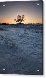 Frozen Tree Of Wisdom Acrylic Print by Aaron J Groen