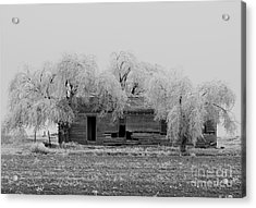 Frozen Trees In Black And White Acrylic Print by Mae Wertz