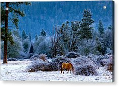 Acrylic Print featuring the photograph Frozen Turf by Julia Hassett