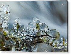 Frozen Wanderland I Acrylic Print