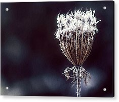 Acrylic Print featuring the photograph Frozen Wisps by Melanie Lankford Photography