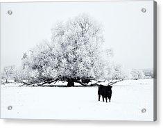 Frozen World Acrylic Print by Mike  Dawson