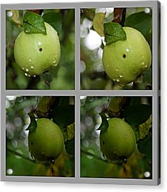 Frucht  Acrylic Print