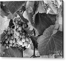 Fruit -grapes In Black And White - Luther Fine Art Acrylic Print