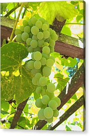 Fruit Of The Vine - Garden Art For The Kitchen Acrylic Print by Brooks Garten Hauschild