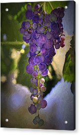 Fruit Of The Vine Acrylic Print