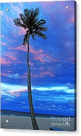 Ft Lauderdale Palm Acrylic Print by Alison Tomich