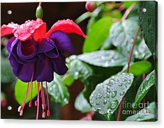 Fuchsia After Rain Acrylic Print