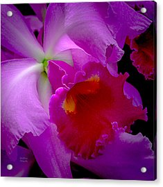 Fuchsia Cattleya Orchid Squared Acrylic Print by Julie Palencia