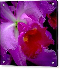 Fuchsia Cattleya Orchid Squared Acrylic Print